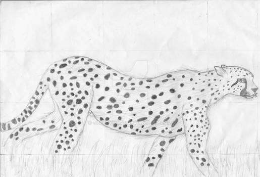 'Tis a Cheetah
