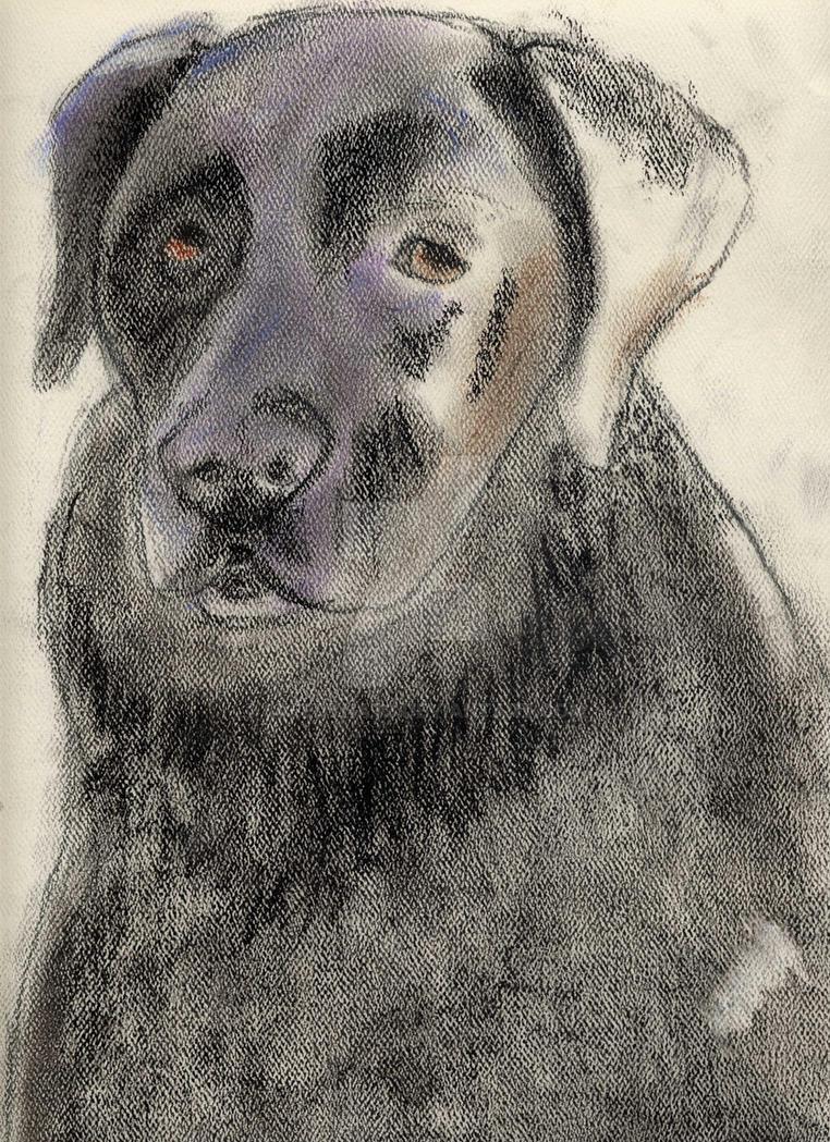 A Black Dog by Speedynat3