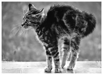 Kitty In Black And White by SuloinenEnkeli