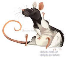 Domino the dumbo rat