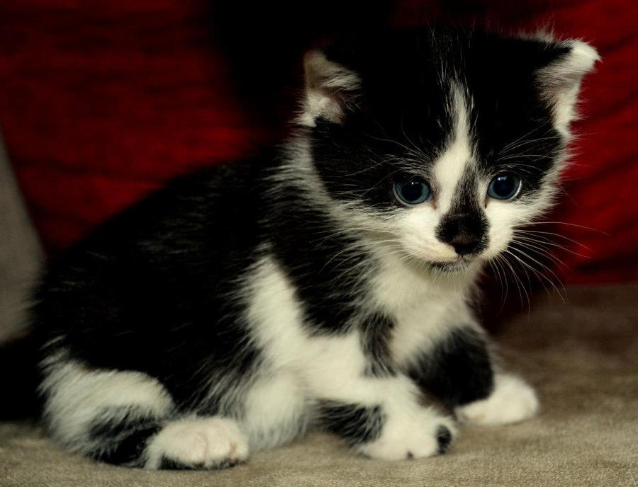 Maji svatki za gnjaviti...[Ne zamerite mi...] Its_a_very_big_world_for_a_little_kitten_by_crisdelina-d4m52g9