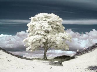 That Tree by Rockin-billy