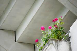 Flowers of RG