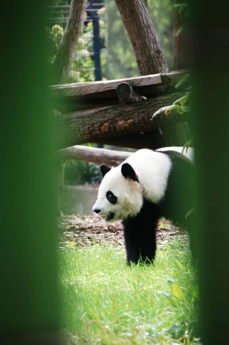 Hidden for the Panda by Heurchon