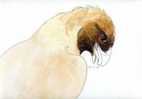 Golden Eagle--Unfinished by kalicothekat