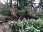 Forest shelter 1