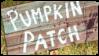 Pumkin patch by Strayva