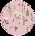 Flowers by Smeoow