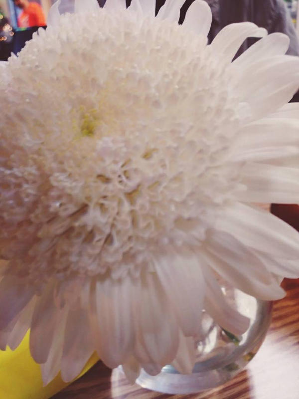White puffy flower by hornygoatboy on deviantart white puffy flower by hornygoatboy mightylinksfo
