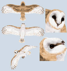 Arokai Owl Tex by Rasiris