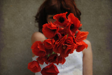 .poppies by immacola