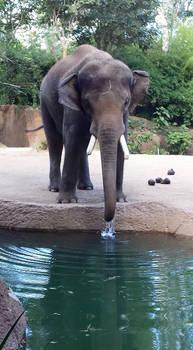 elephant stock 04