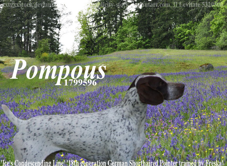 Pompous by jcjrichter06