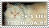 Cats follow me stamp by ARTic-Weather