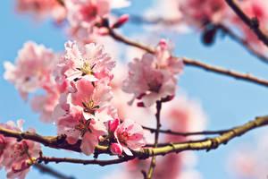 Fresh Blooms by dellamort