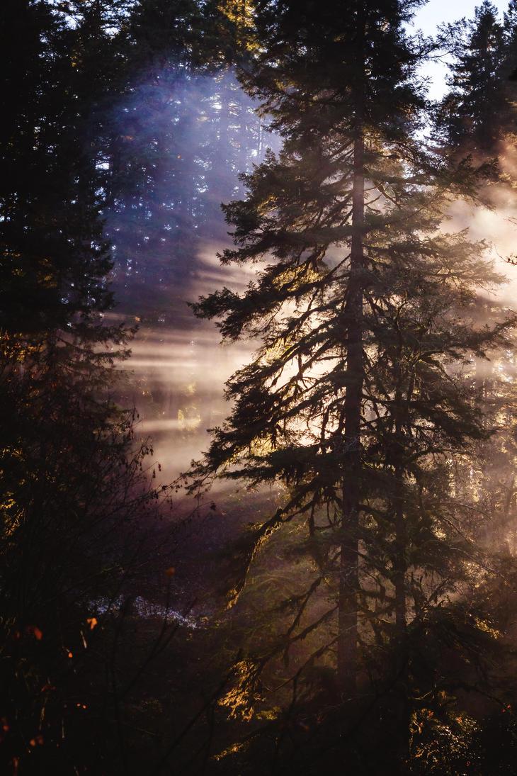 Alone in the Light by dellamort