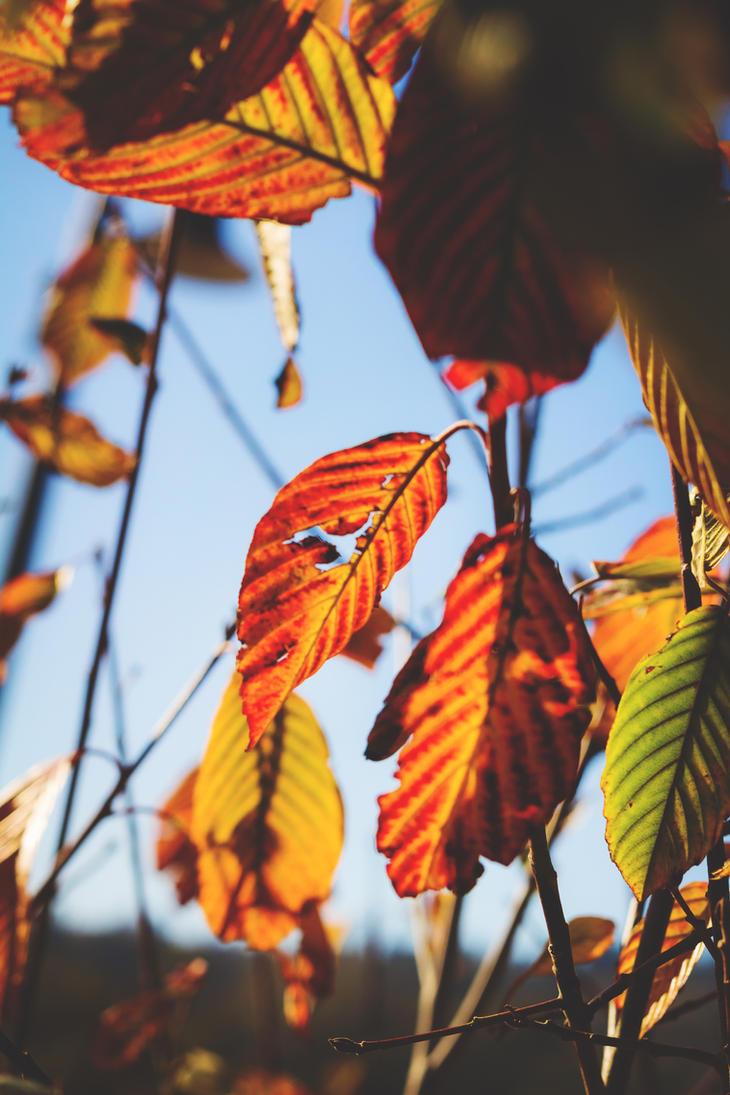 Fall light by dellamort