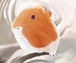Henry the Guinea pig