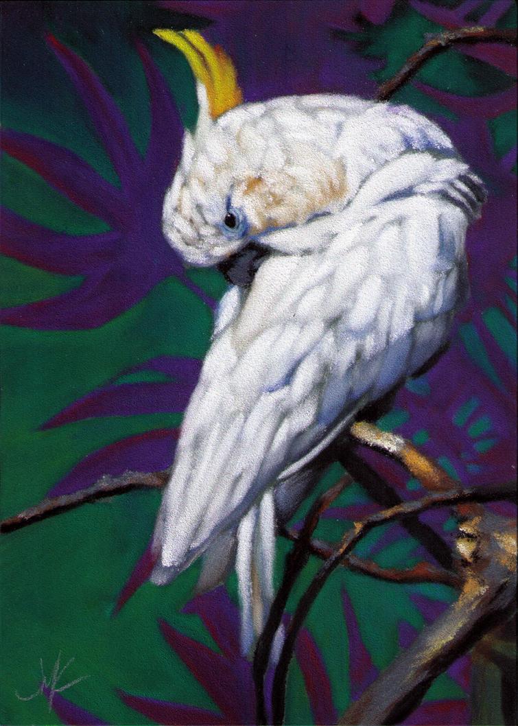 Cockatoo by J-A-N-I-N-E