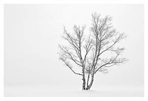 Winter Solitude by jjuuhhaa