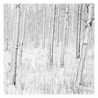 Winter by jjuuhhaa