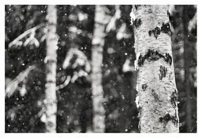 Snowfall by jjuuhhaa