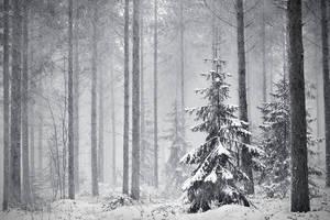 Winter Forest by jjuuhhaa