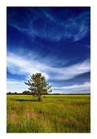 a Pine on the Field by jjuuhhaa