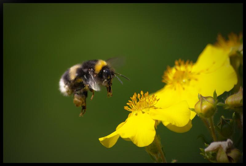 Another Bee by jjuuhhaa