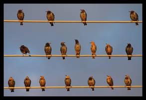 Birds by jjuuhhaa