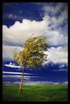 an Autumn Tree by jjuuhhaa
