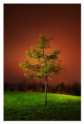 a Tree in a Night by jjuuhhaa
