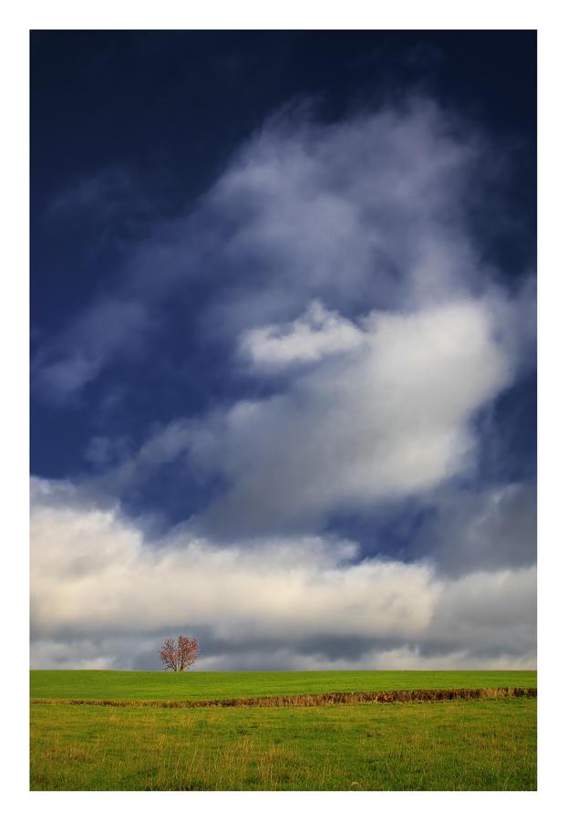 a Tree on a Hill pt.2 by jjuuhhaa