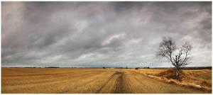 Field Panodrama