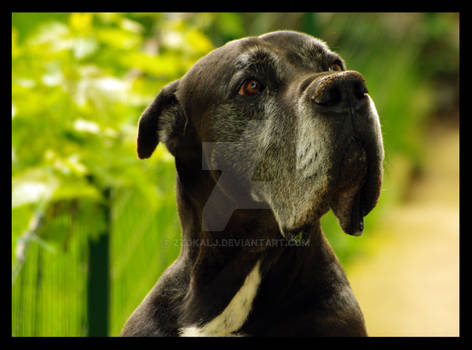 Ahel the Dog