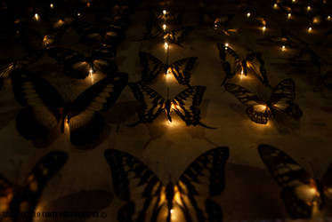 Butterflies in the night. by EricLoConte