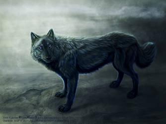 Blue from Wolf's Rain by FelisGlacialis