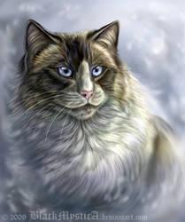 Ragdoll portrait by FelisGlacialis