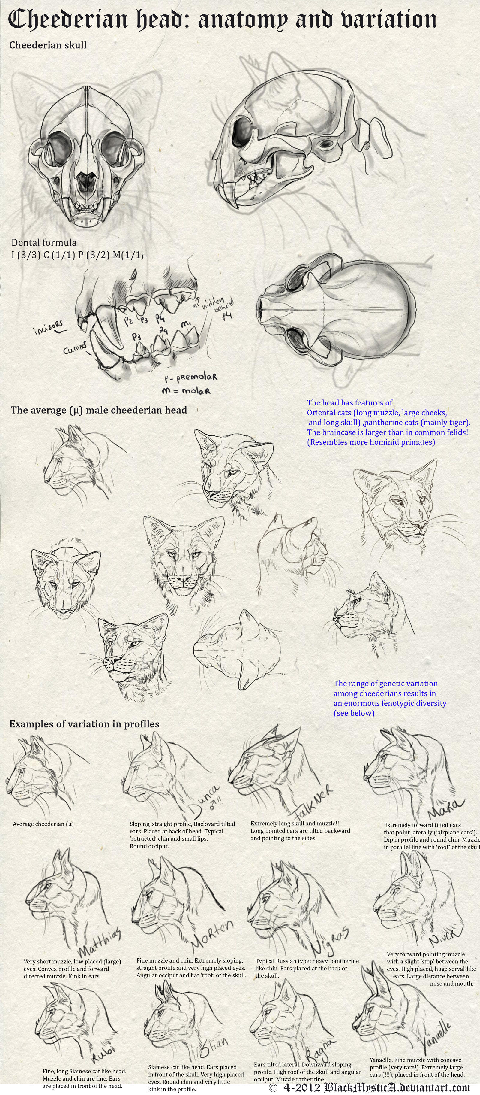 OUT of DATE - Cheederian head anatomy by FelisGlacialis on DeviantArt
