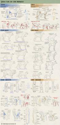 Felines vs Canines tutorial - General morphology
