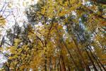 Yellow.2