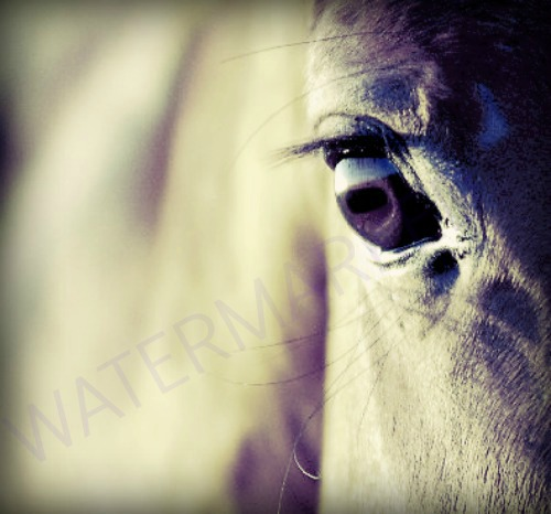 A Horse's eye, states its feelings. by Olly-murs-gal-11