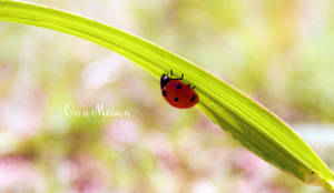 Ladybug - On a Mission by xin-e