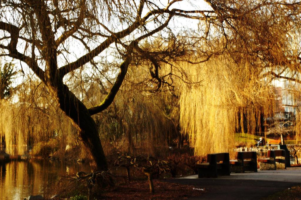 Golden Tree Scene by torngemini