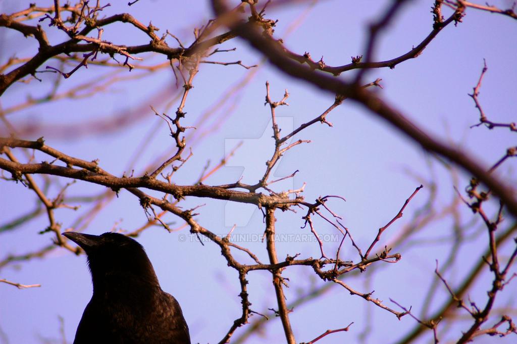 Crow Profile by torngemini