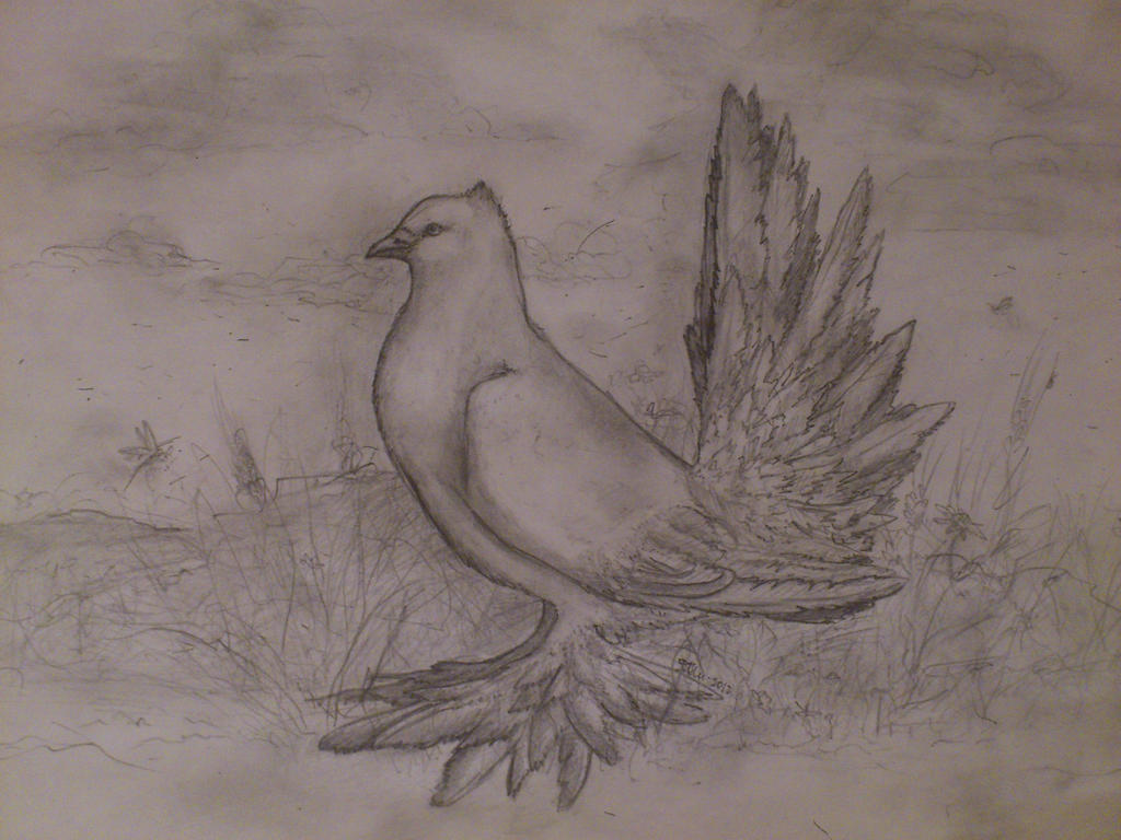 Dove by bertc