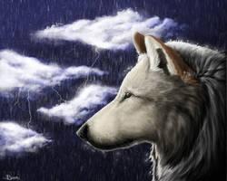 Rainy day by bertc