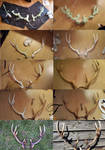 making of antlers