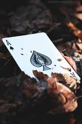 Ace of Autumn by DogaErbilen