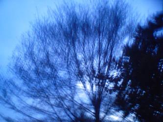 Twilight Treetop